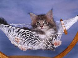 Cat03rk095015_2
