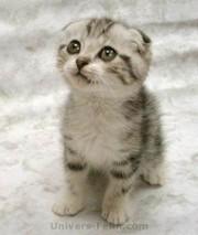 Big_8817_cute_20cat_1__2